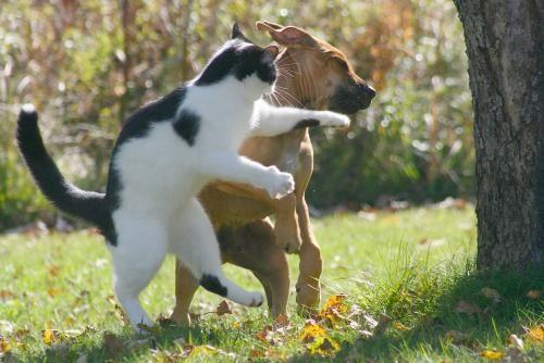 נקמת החתול