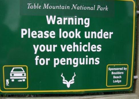 זהירות פינגוינים