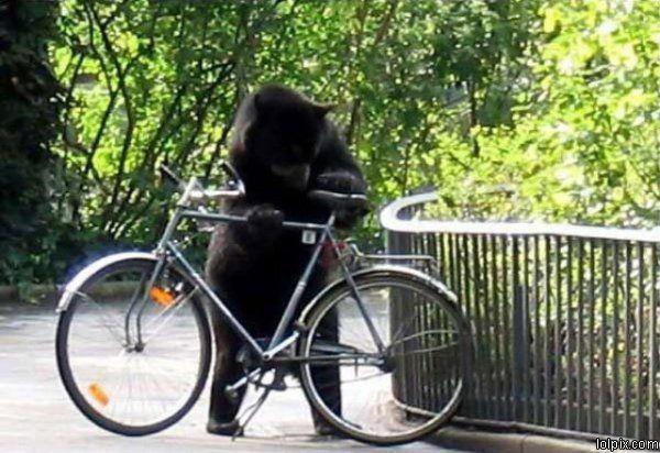גנב אופניים