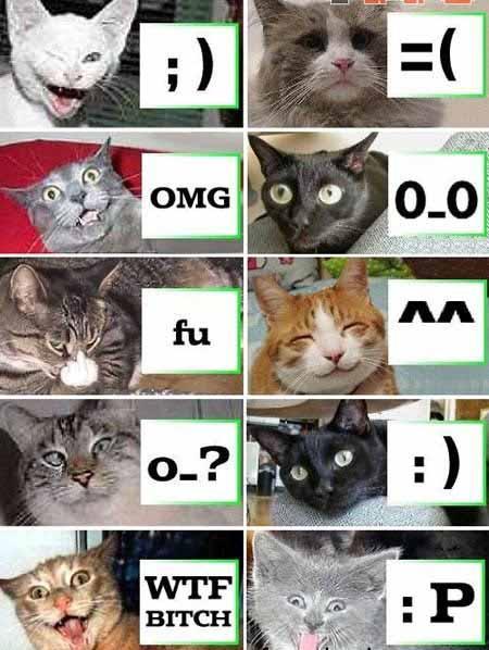 פרצופי חתולים