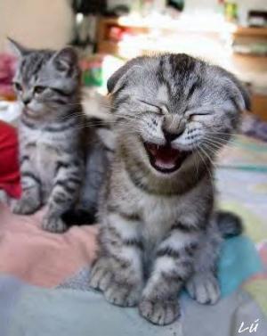 חתול צוחק