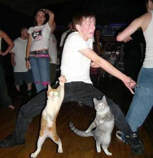 מסיבת חתולים