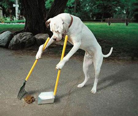 תנקה אחריך