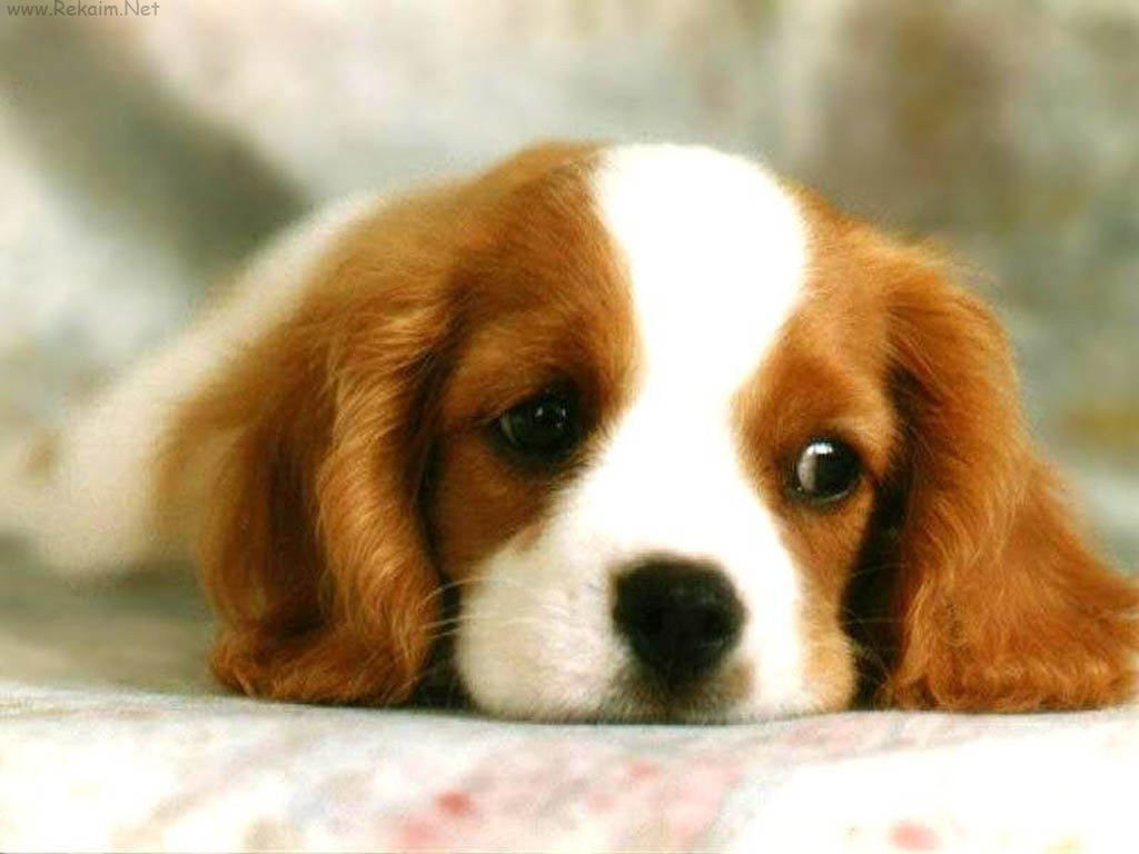 כלב חמוד!