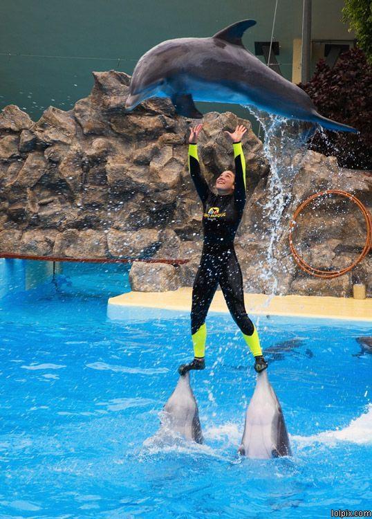 פעלולי דולפינים
