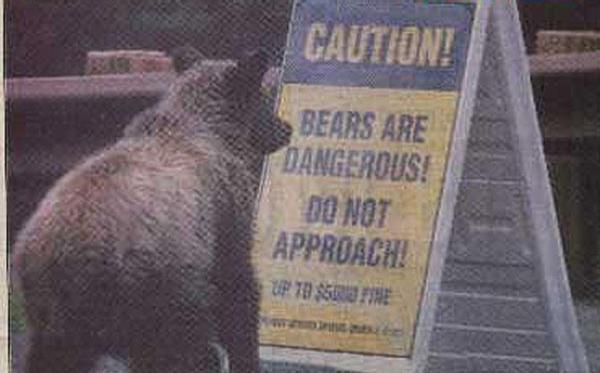 סכנה ! דובים