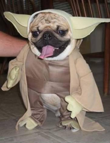 כלב ממלחמת הכוכבים