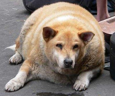 כלב או חבית בירה?