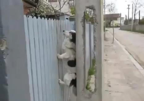 מה כלבים עושים שמגרד להם הגב