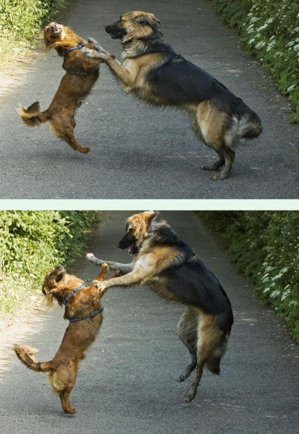 כלבים רוקדים