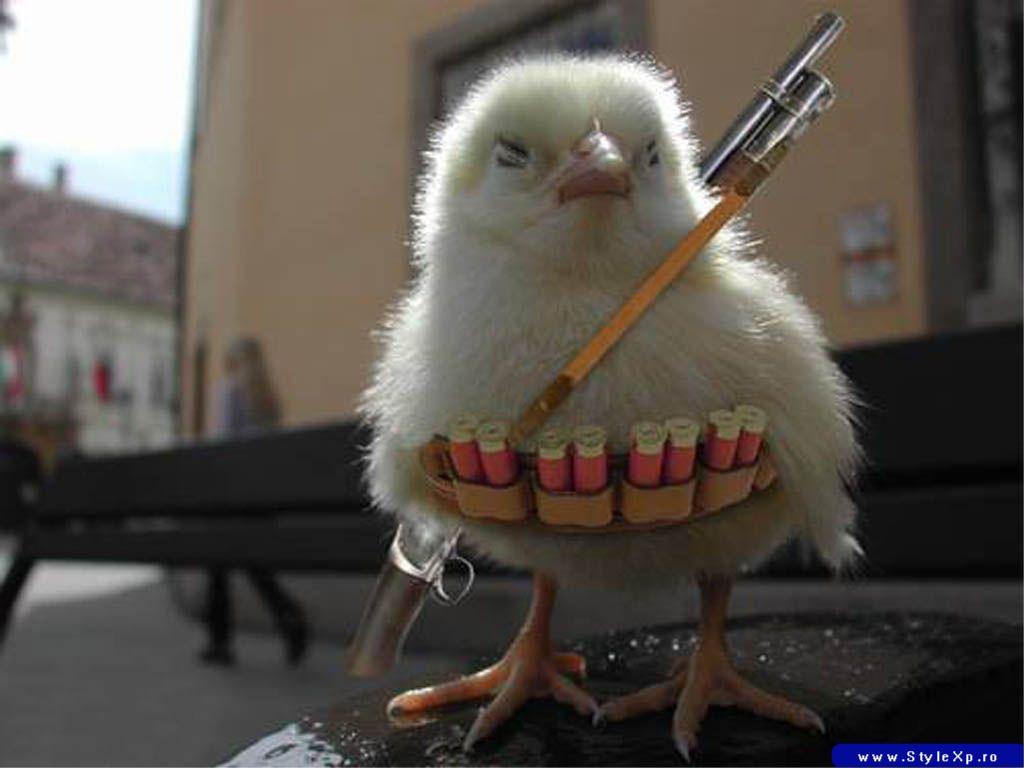 שומר הביצים