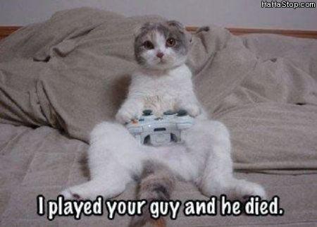 חתול גיימר