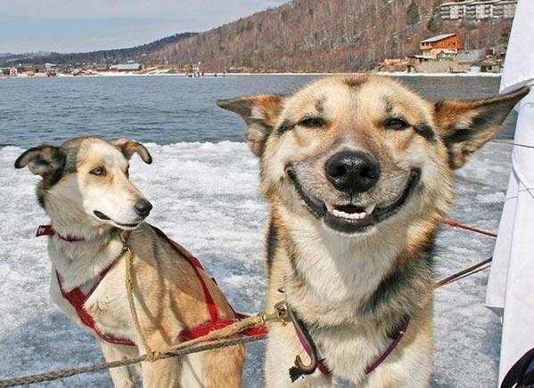 כלב מאושר