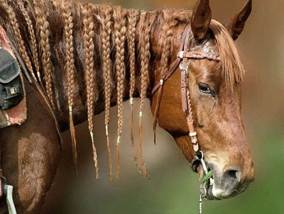 סוס עם צמות