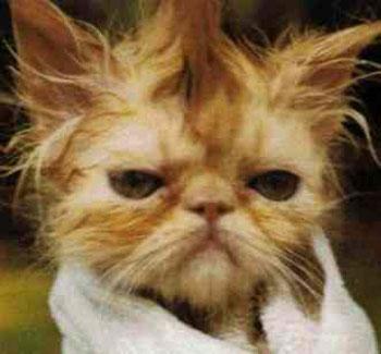 חתול מכוער או חתיך?
