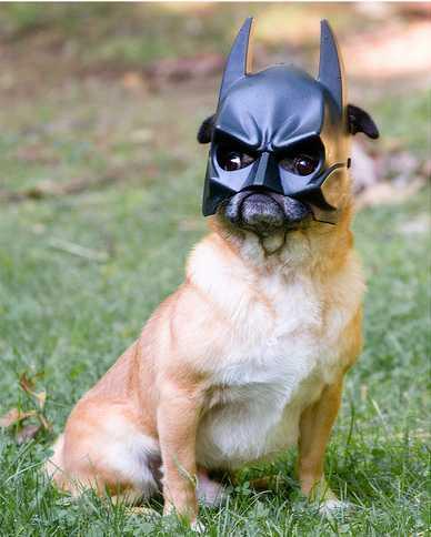 אני הוא באטמן