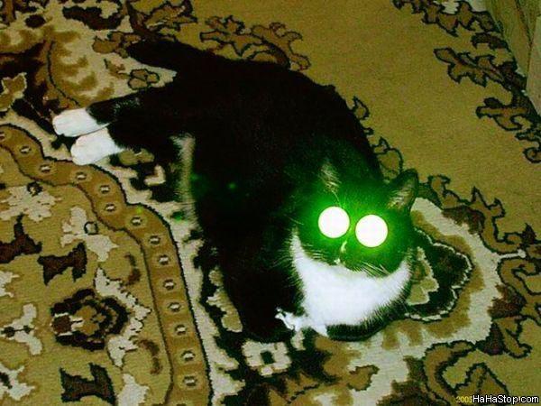 חתול לייזר