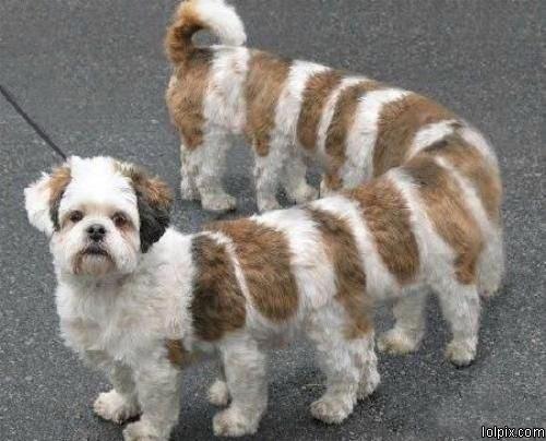 מרבה-כלבים