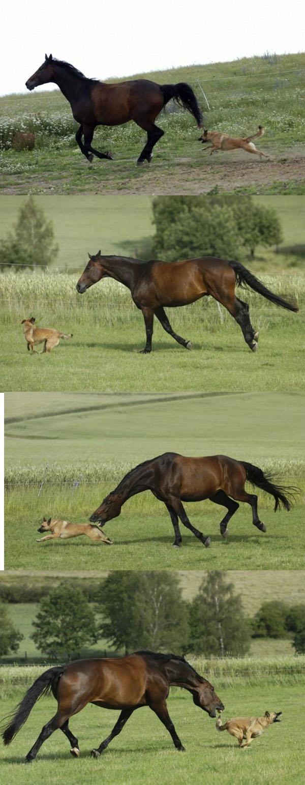 שהסוס והכלב נפגשו לראשונה