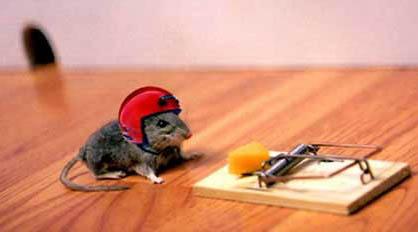 עכבר זהיר