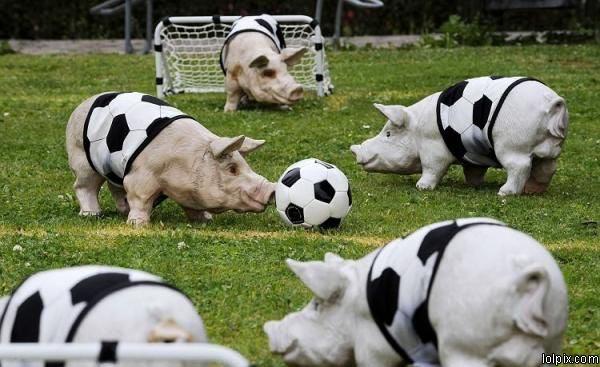 כדור-חזיר