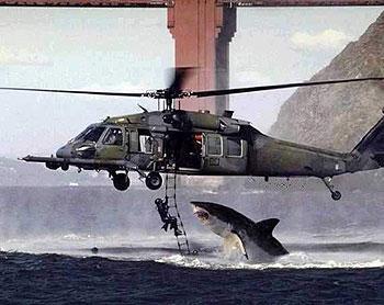 כריש מסוכן