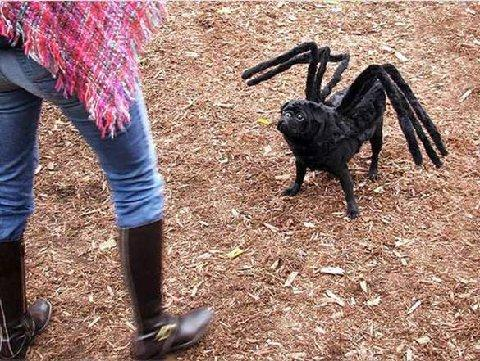 עכביש?