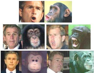 בוש הקוף