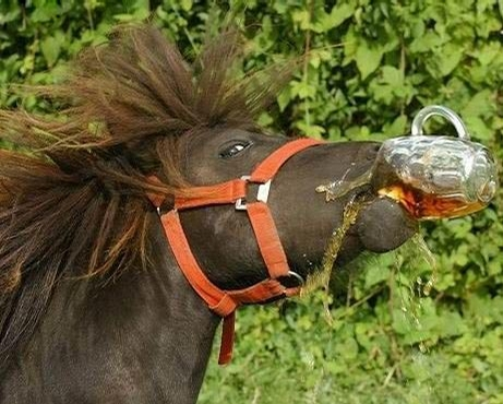 בירה לסוס