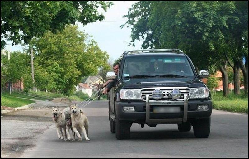 טיול עם הכלבים