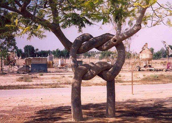 עץ מאוהב
