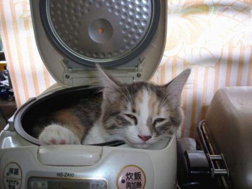 חתול במכבסה