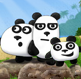 3 דובי פנדה