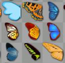 פרפרים על לוח