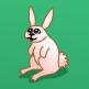 גידול ארנבים